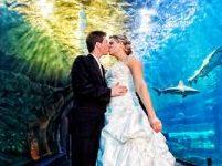 はじめてのデートは水族館♡ 思い出の場所でおしゃれWedding…♪